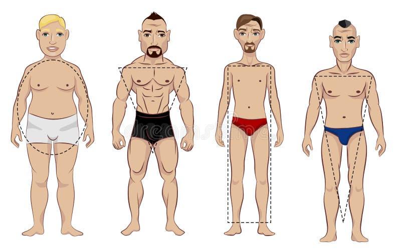 Tipos da figura masculina ilustração royalty free