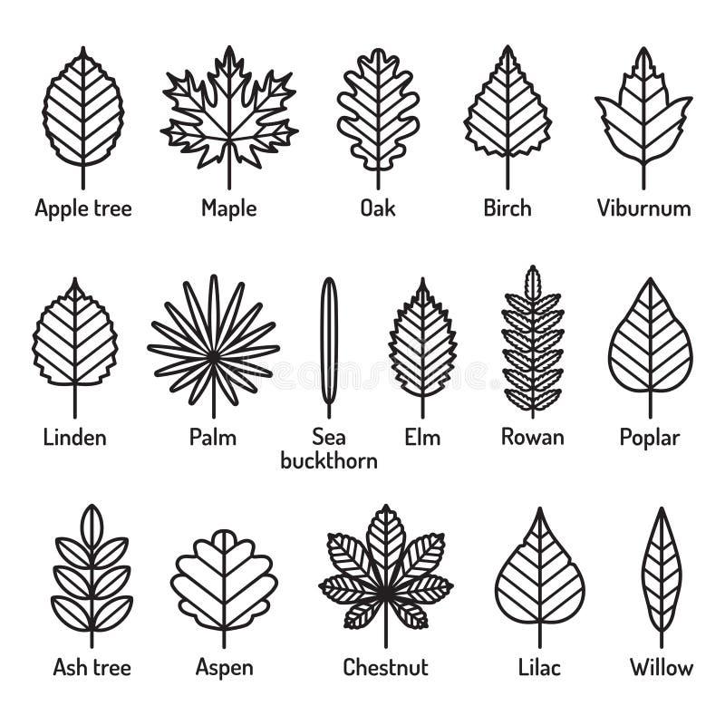 Tipos das folhas com grupo do vetor dos ícones dos nomes Ícones pretos do esboço ilustração do vetor