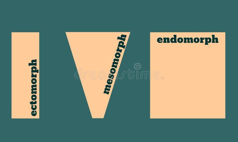 Tipos de corpo: Ectomorph, Mesomorph e Endomorph Ilustração do vetor ilustração do vetor