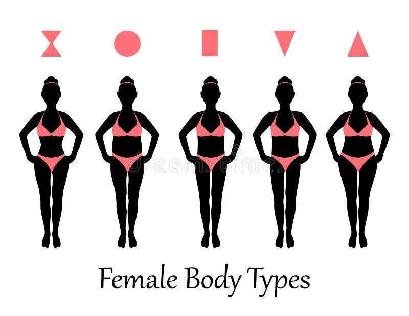 Tipos de cuerpo femenino stock de ilustración