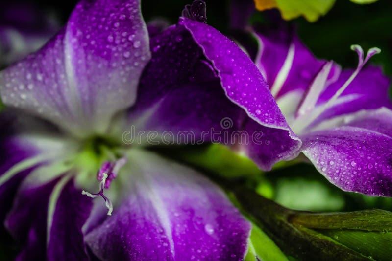 Tipos de flor Misted foto de stock