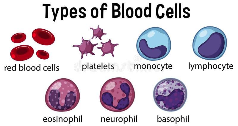 Tipos de glóbulos ilustração royalty free