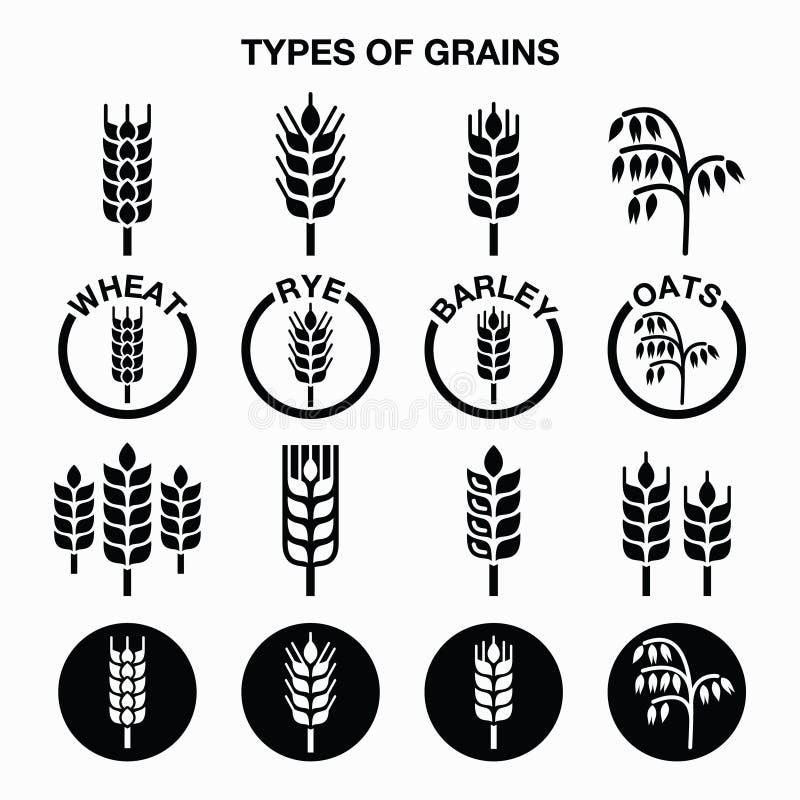 Tipos de granos, iconos de los cereales - trigo, centeno, cebada, avena stock de ilustración