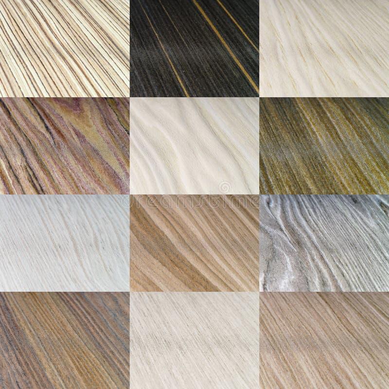 Tipos de madera de la cobertura fijados foto de archivo