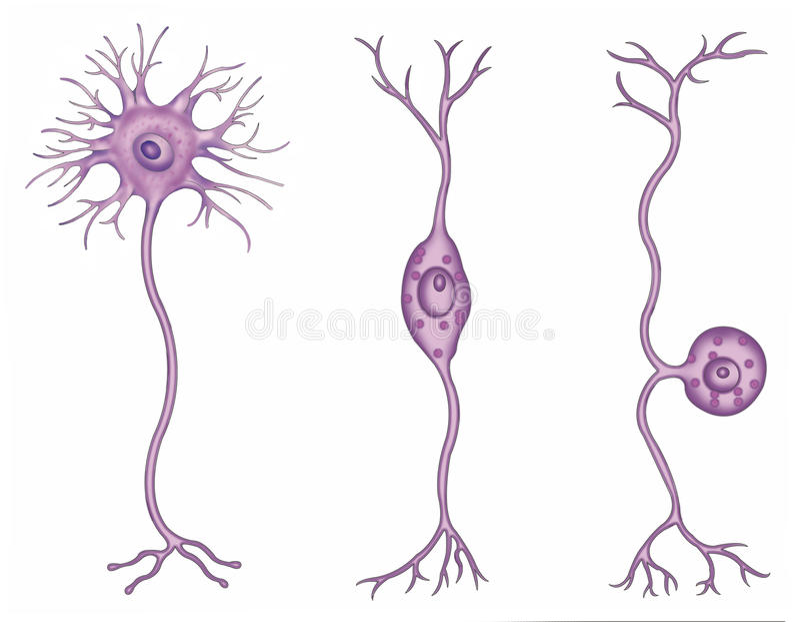 Tipos de neuronas stock de ilustración