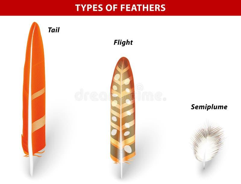 Tipos de plumas de pájaro ilustración del vector