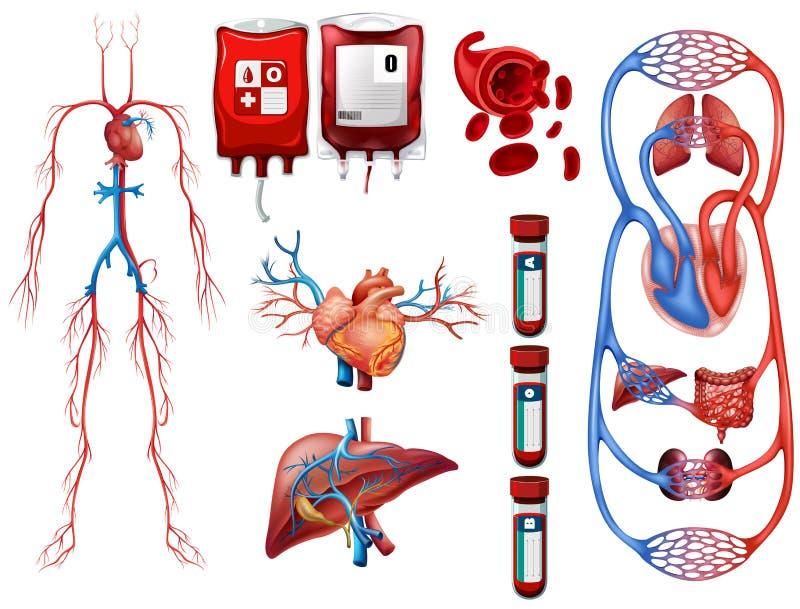 Tipos de sangre y sistema de respiración libre illustration