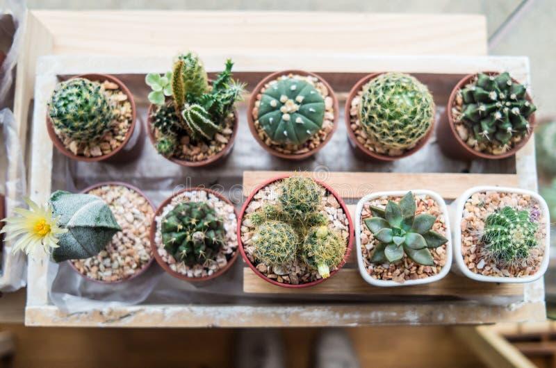 Tipos de vaious de cactus foto de archivo imagen 46311433 for Clases de cactus