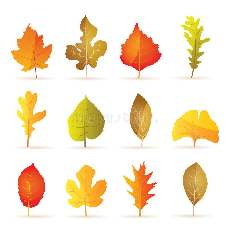 Tipos diferentes de ícones da folha do outono da árvore ilustração royalty free