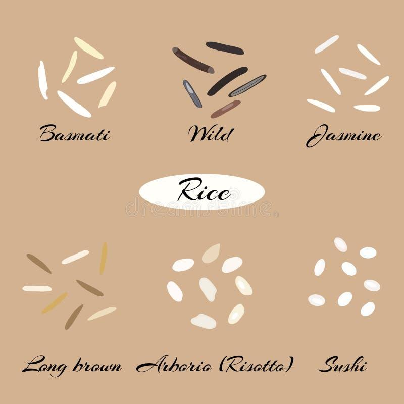Tipos diferentes de arroz ilustração royalty free