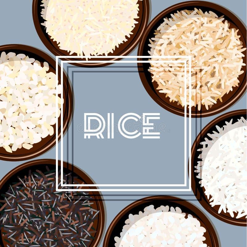 Tipos diferentes de arroz em umas bacias Basmati, selvagem, jasmim, marrom longo, arborio, sushi chopsticks ilustração stock