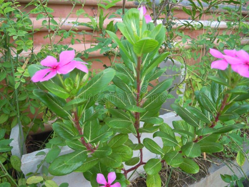 Tipos diferentes de botão e de flor da planta e das árvores fotografia de stock