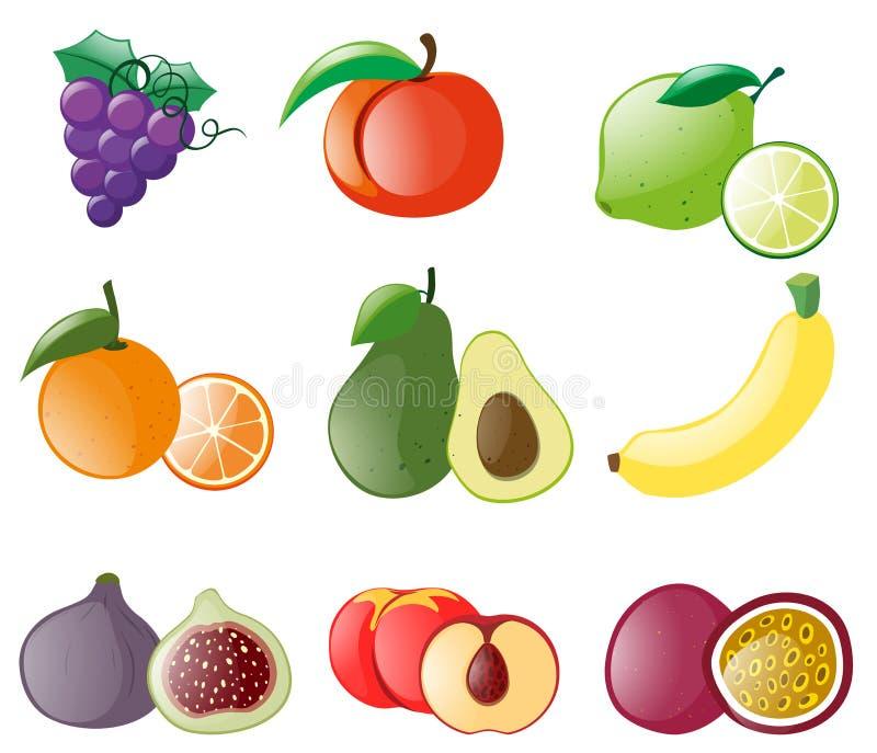 Tipos diferentes de frutos frescos ilustração stock