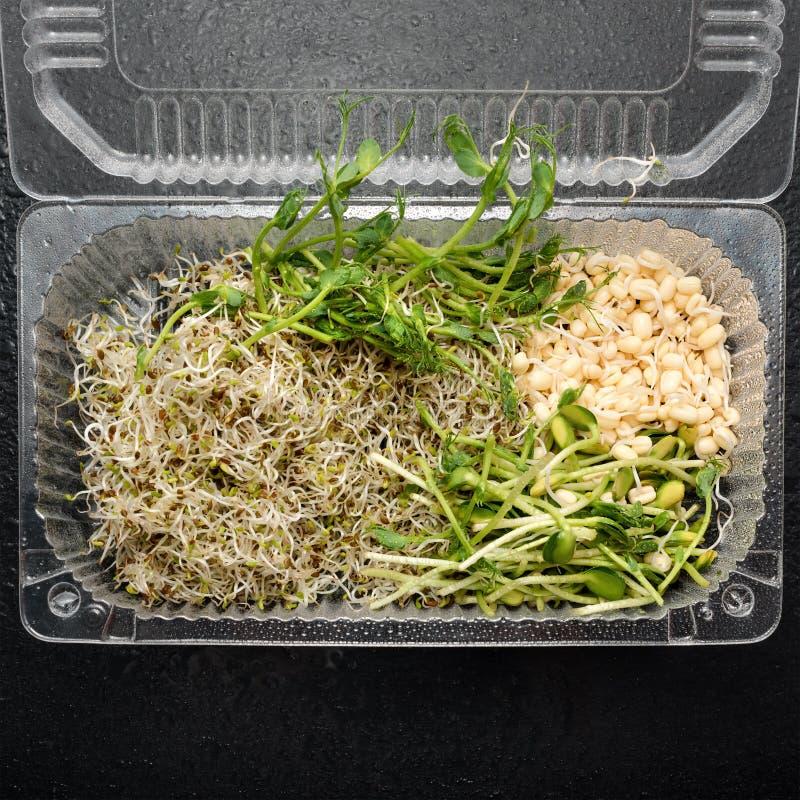 Tipos diferentes de micro verdes no recipiente plástico no fundo preto Conceito saudável comer do produto fresco do jardim imagem de stock royalty free