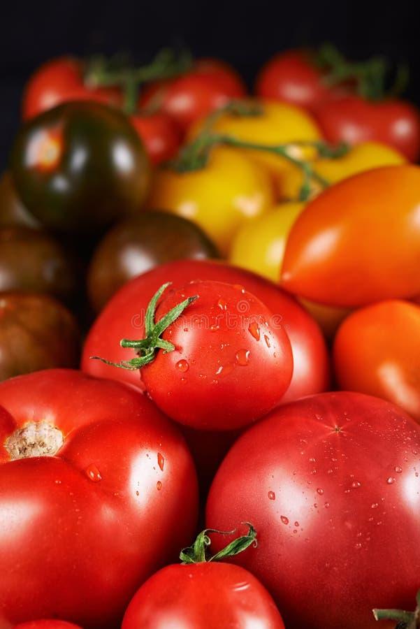 Tipos diferentes de tomates imagens de stock