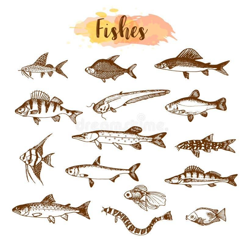 Tipos e tipos dos peixes Ilustrações tiradas mão do vetor Peixes do lago na linha estilo da arte Criaturas do mar e do oceano do  ilustração stock