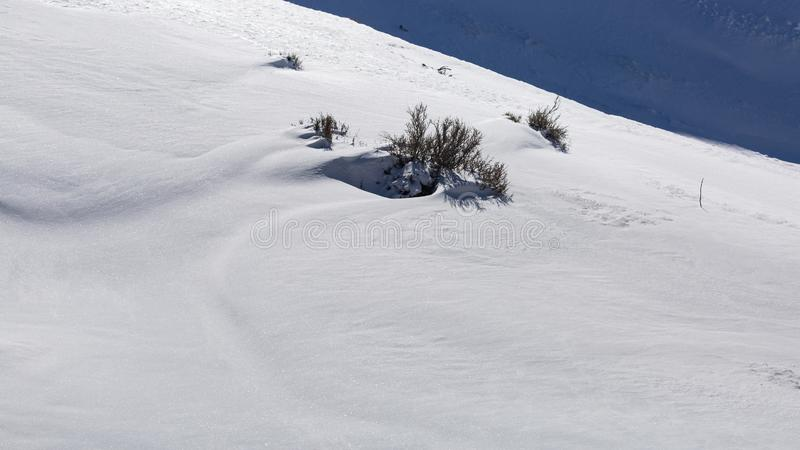 The tips of a few sagebrush plants stick out of the white drifted snow while the drift in the background is in blue shadow.  stock photography