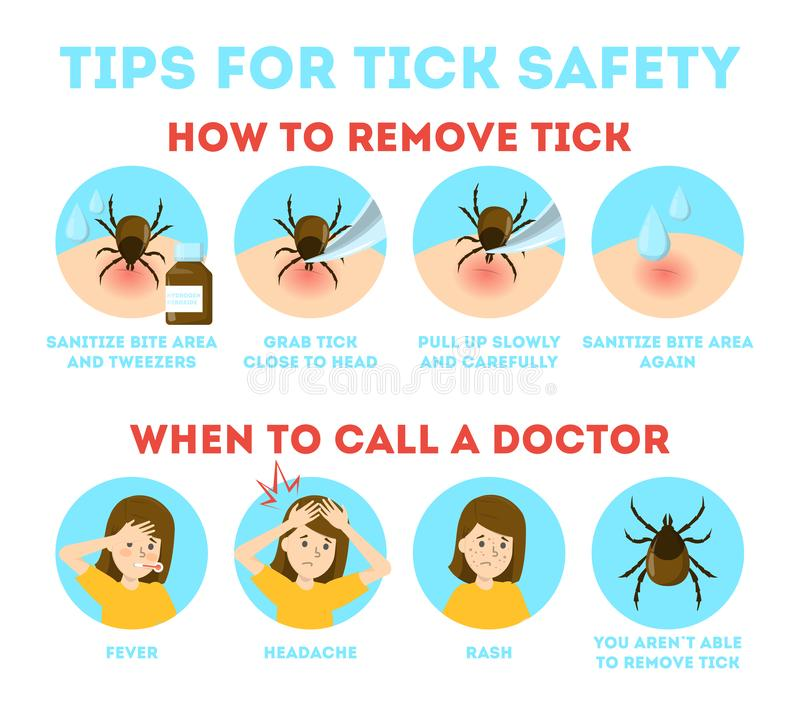 Tips for tick safety infographic. How to remove mite stock illustration