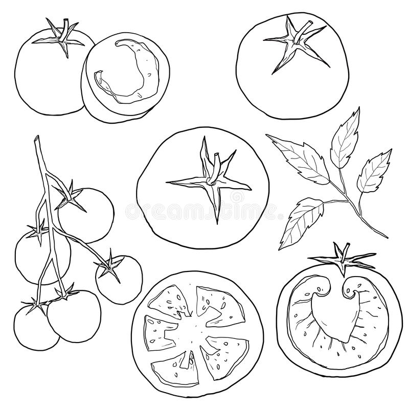Tiré par la main réglé illustration tomate de schéma illustration stock