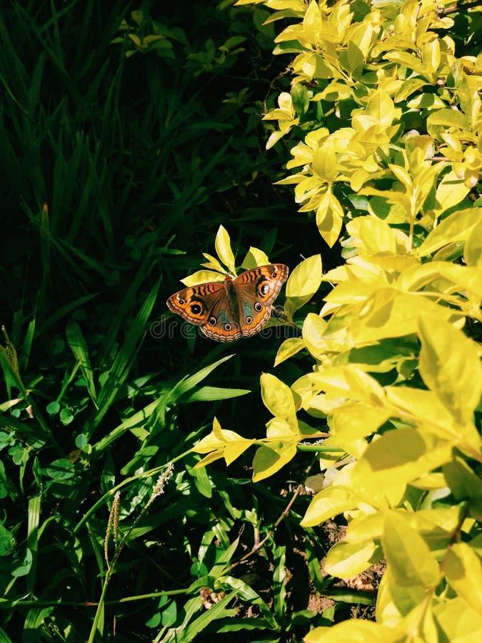 Tir étonnant de papillon pendant le matin photographie stock