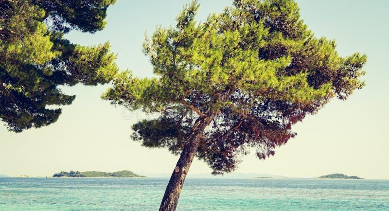 Tir étroit d'un arbre incliné près d'une mer un jour ensoleillé images libres de droits