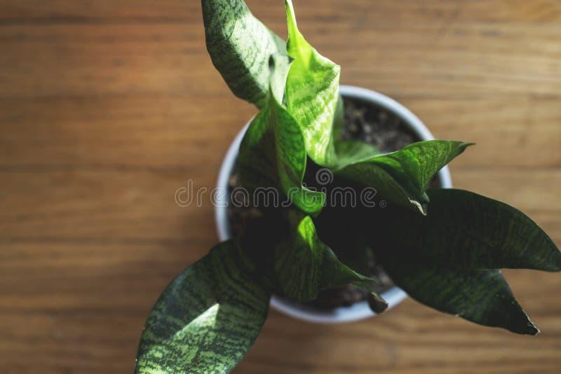 Tir aérien de plan rapproché extrême d'une plante verte dans un pot rempli de sol photographie stock libre de droits