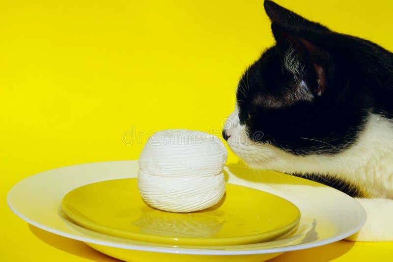 Tir cultivé de Cat Over Yellow Background Le chat vole la nourriture de la table photos stock