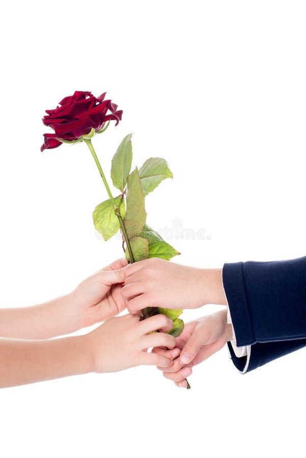tir cultivé de petits enfants tenant la fleur rose dans des mains image stock
