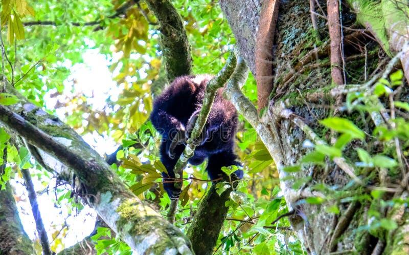 Tir d'angle faible d'un singe marchant sur une branche avec le fond naturel brouillé photographie stock