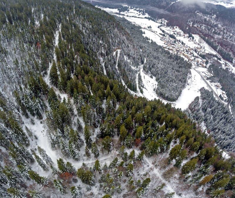 Tir de bourdon de stupéfaction d'une forêt alpine neigeuse photo libre de droits