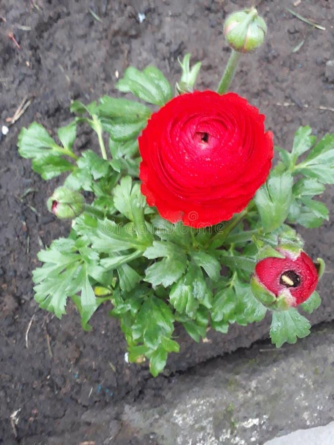 Tir de fleur image libre de droits