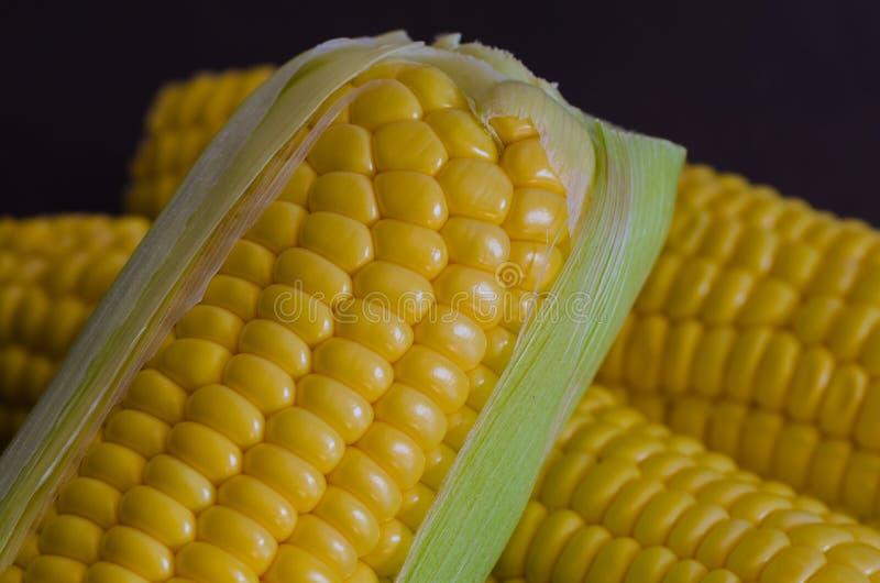 Tir de plan rapproché de maïs macro sur le fond noir photos stock