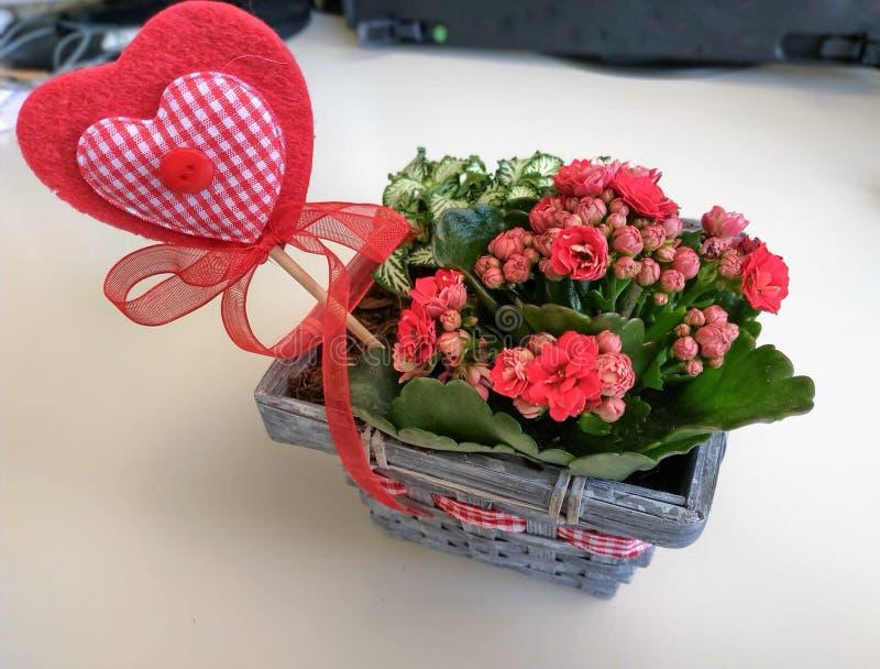 Tir en plan rapproch? en petite et jolie fleur photo stock