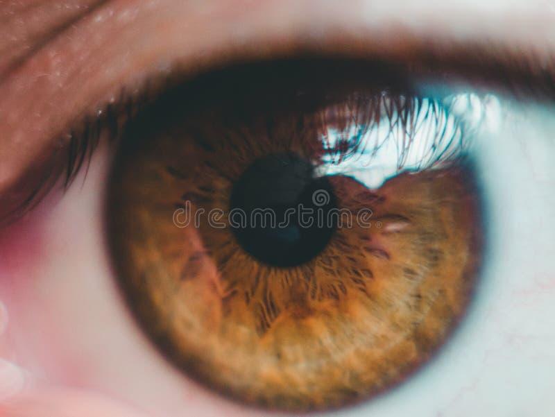 Tir haut étroit d'un oeil brun clair image stock