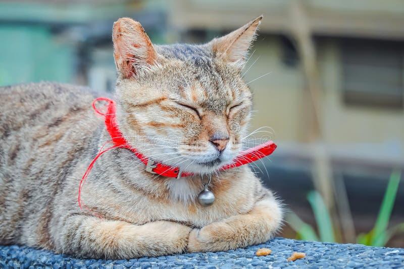 Tir haut étroit du vieux chat brun dormant dessus sur un mur chez Houtong Cat Village dans Ruifang image stock