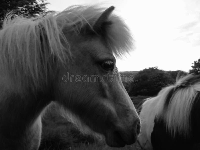 Tir latéral de poney photographie stock libre de droits