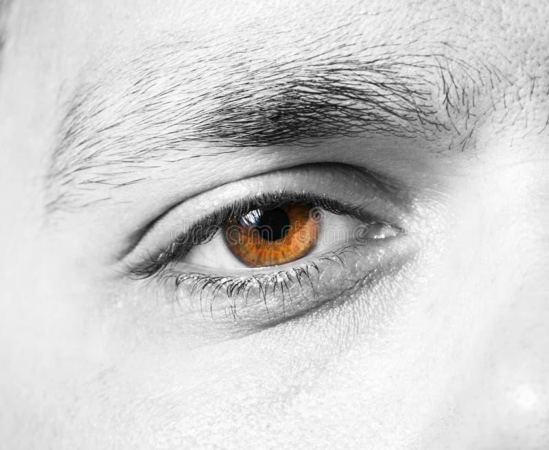 Tir masculin de macro d'oeil photos libres de droits