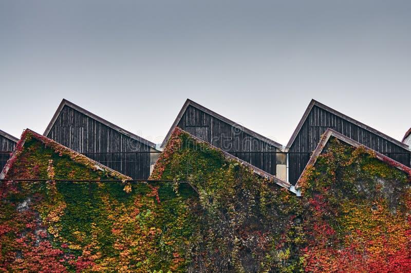 Tir moyen sur le toit de la dent de scie d'une usine démodée avec les feuilles colorées d'automne autour photographie stock libre de droits