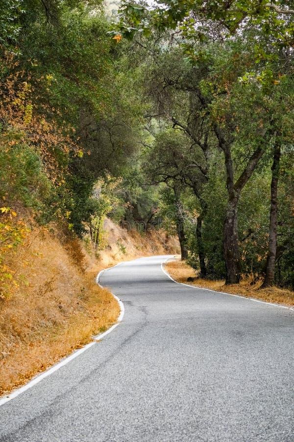 Tir scénique de route étroite le long des arbres dans la forêt, Henry W Parc d'état de Coe, région de San Francisco Bay, la Calif images stock