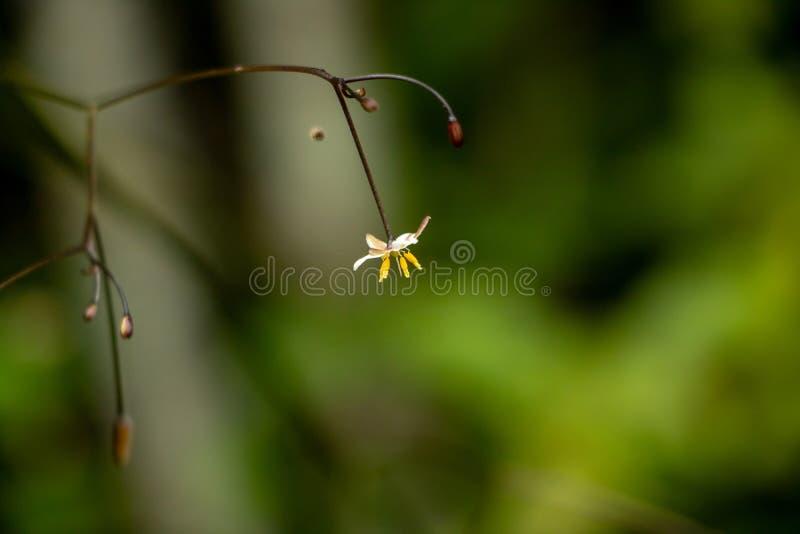 Tir solitaire de plan rapproché de fleur photos stock