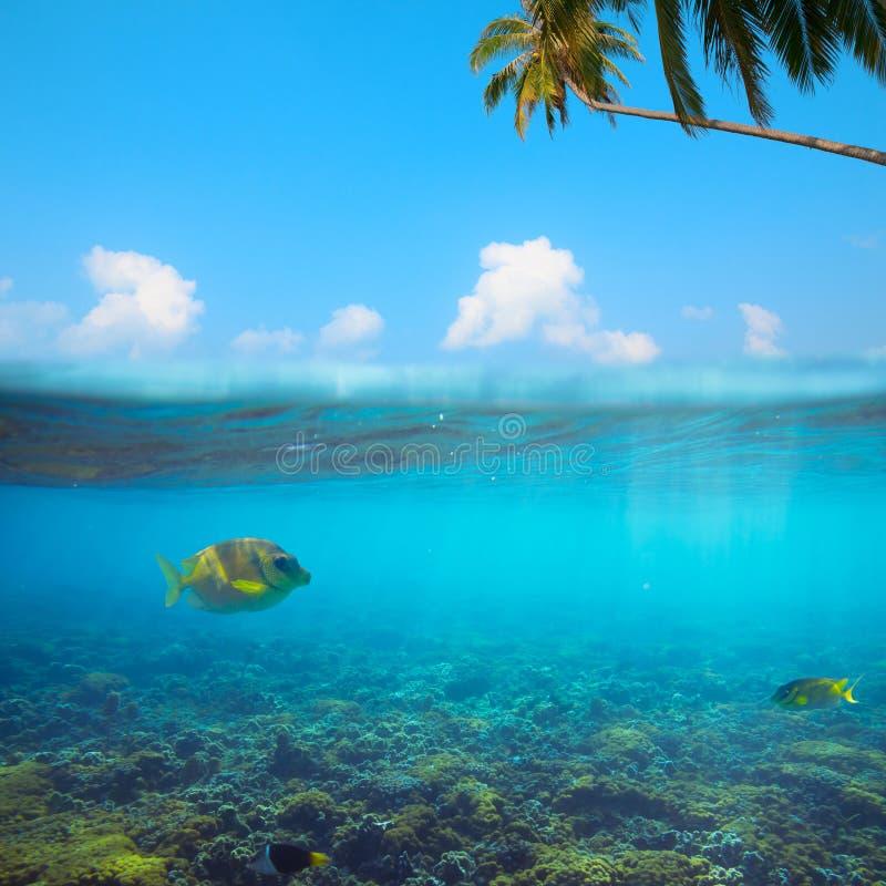 Tir sous-marin tropical images stock