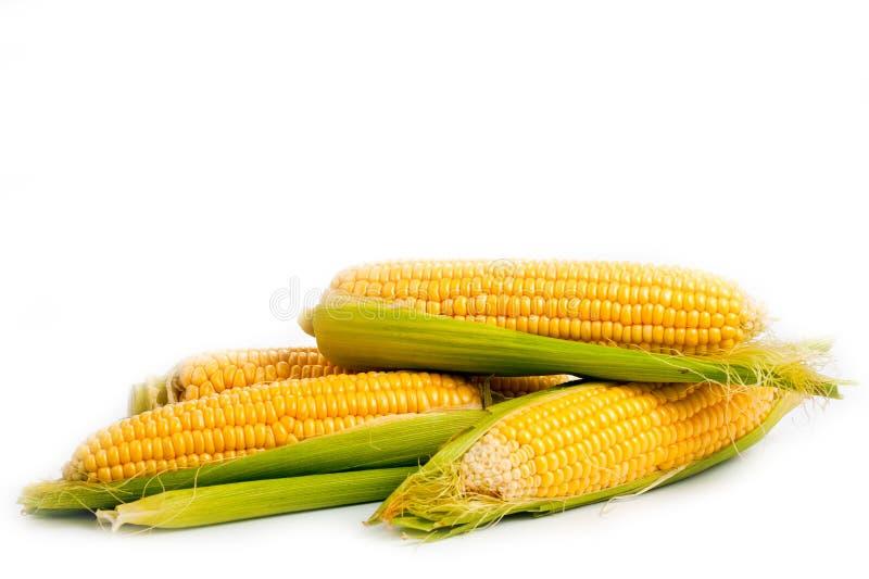 Tir végétarien juteux lumineux de maïs au-dessus du fond blanc image libre de droits