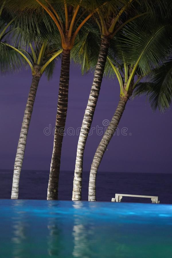 Tir vertical des palmiers près d'une piscine d'infini en République Dominicaine la nuit images stock