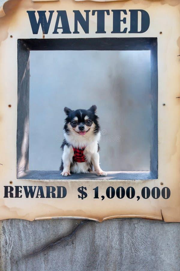 Tir voulu de chien image libre de droits