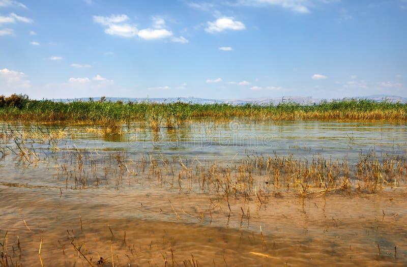 Tira litoral do lago Kinneret com arbustos julho fotografia de stock
