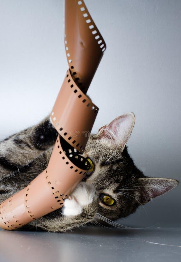 Tira loca del gatito y de la película imagenes de archivo