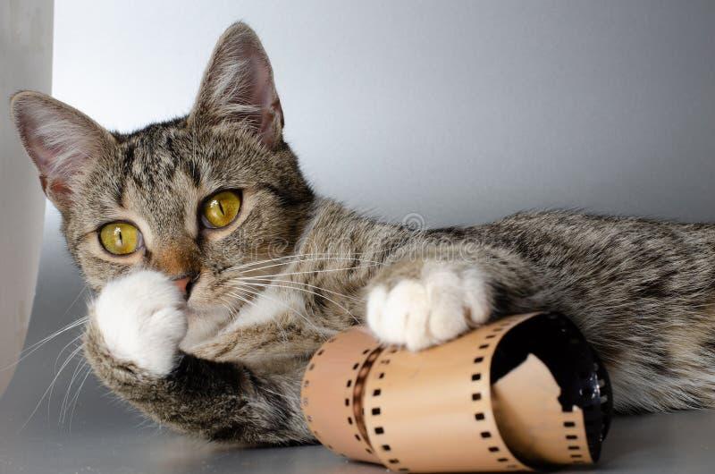 Tira loca del gatito y de la pel?cula fotos de archivo