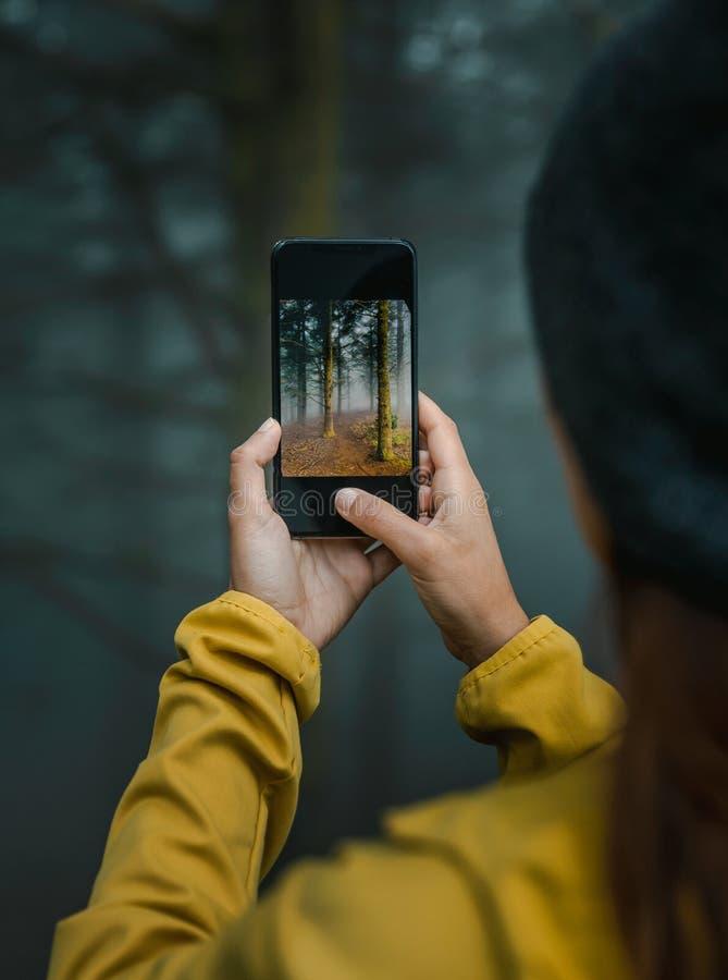 Tirando uma foto de uma floresta imagem de stock royalty free