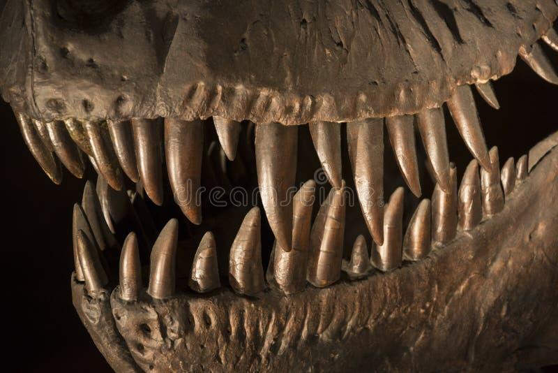 Tirannosauro Rex - dinosauro preistorico fotografia stock libera da diritti