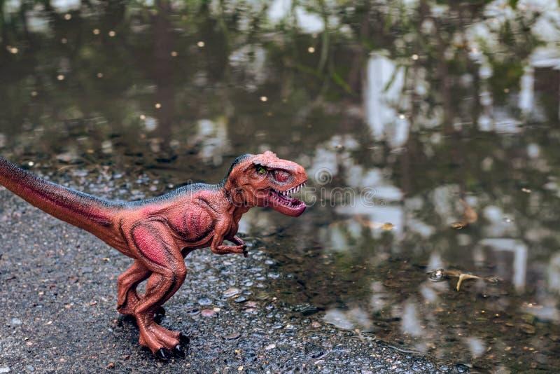 Tirannosauro vicino all'acqua nella foresta fotografie stock libere da diritti